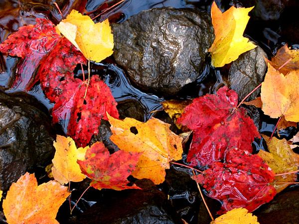 L'automne et ses feuilles