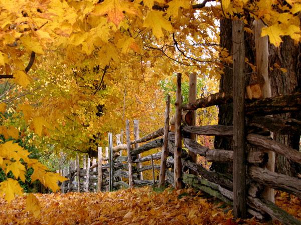 Fuyante en automne