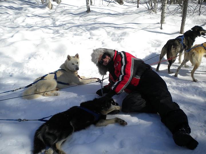 Traineau à chien au Québec