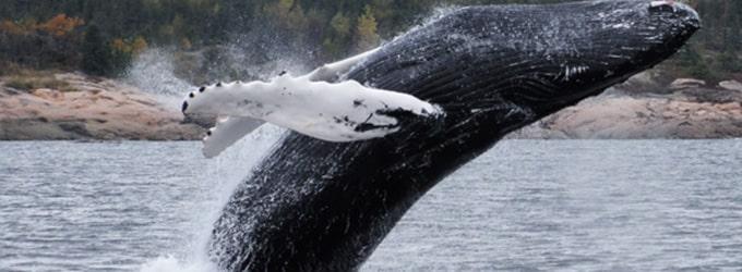 tadoussac baleine canada