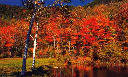 image automne quebec