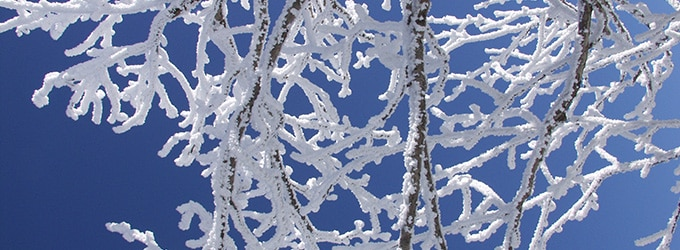 nature quebecoise sous la neige