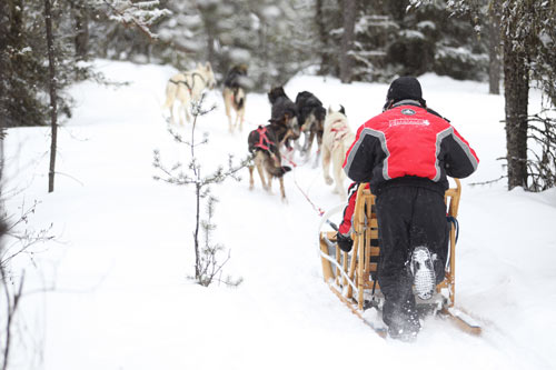 expedition traineau chien