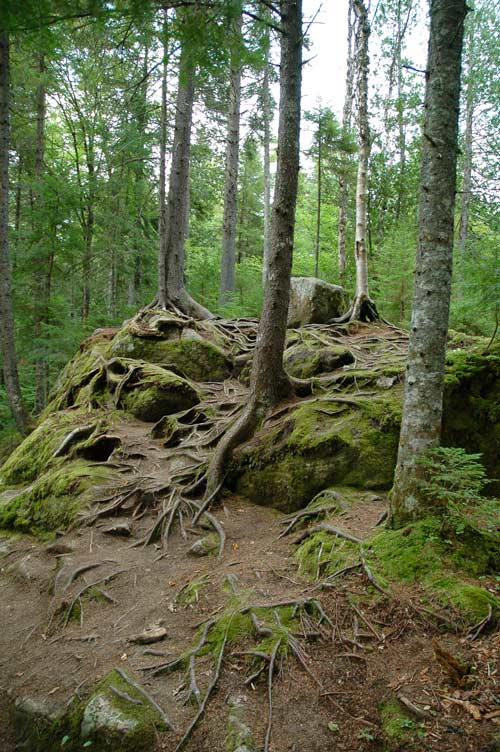 racines du canada
