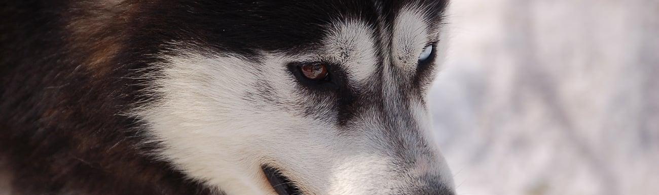 photos du chien