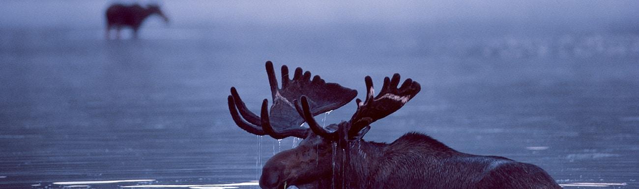 observation animaux au quebec