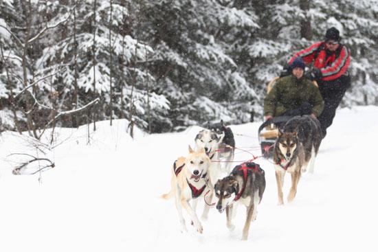 Raid chien de traineau canada
