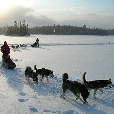 traineau chien canada
