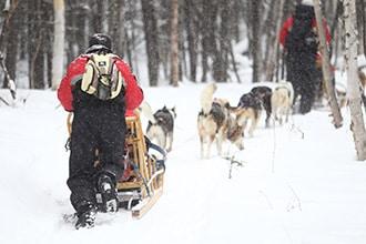 Quebec chien traineau