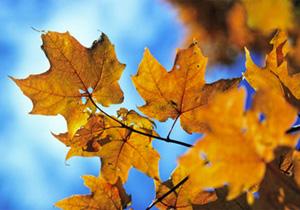 Couleur d'automne au Canada