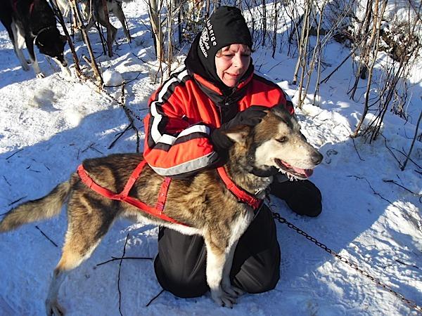 Canada et chiens