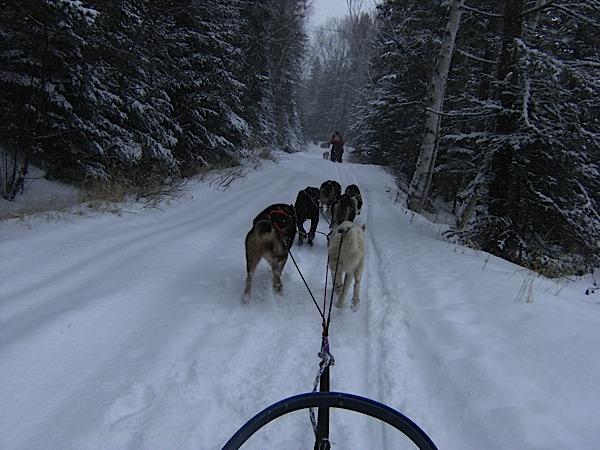 chiens traineaux canada