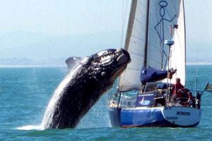 Baleines tadoussac