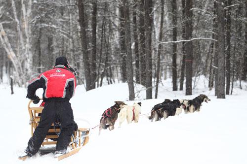 voyage chien de traineau