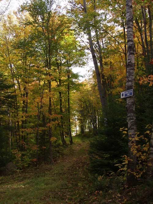 chemin forestier