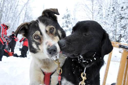 bisou chien