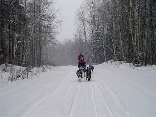 traineau sous neige