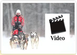 Vidéo de raid en chien de traineau au Canada