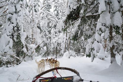foret neige