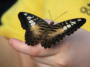 papillons en fete quebec