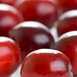 canneberges les petits fruits miracles du quebec