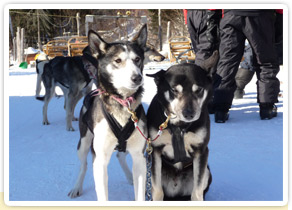 Randonnée en chiens de traineaux : Des photos qui ont du chien !!!