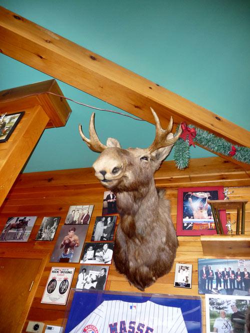 portrait caribou