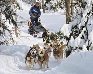 sejour chien de traineau au québec
