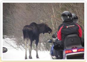 Observation des animaux au Canada durant l'hiver