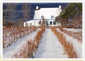 Vin du Québec et vignoble québécois