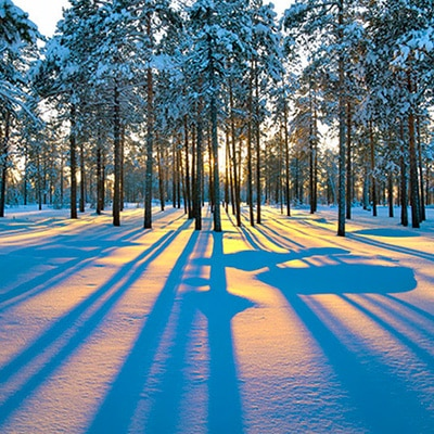 foret canada hiver