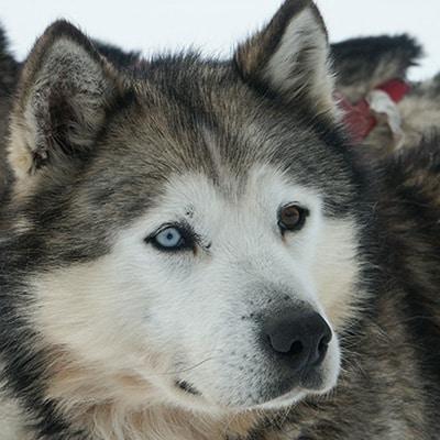 husky canada