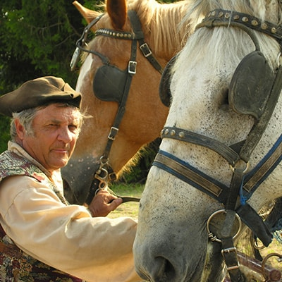 cheval caleche