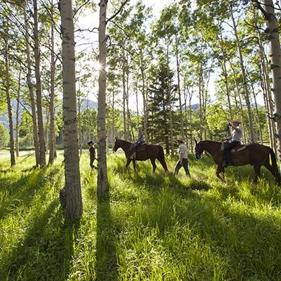 cheval canada
