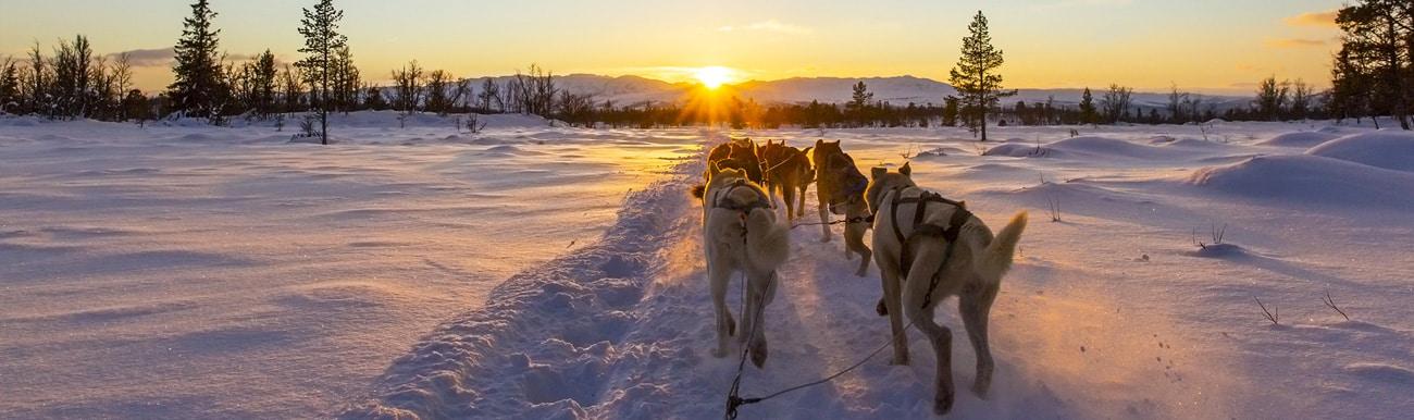 chien traineau canada