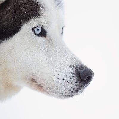 husky quebec