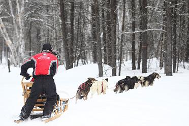 traineau a chien au canada