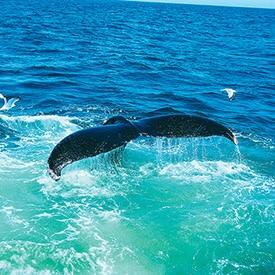 observation baleines tadoussac