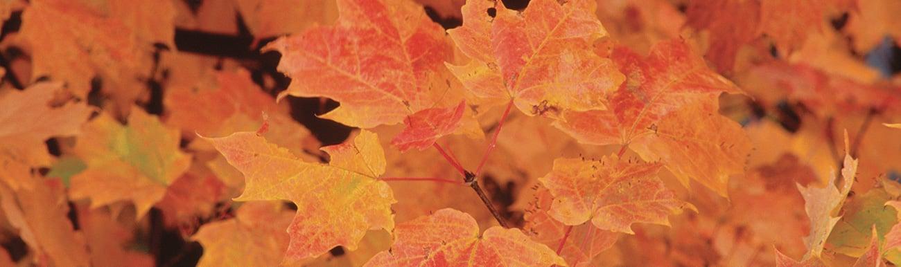 10 plus beaux paysages automne quebec