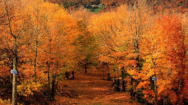mont sutton automne