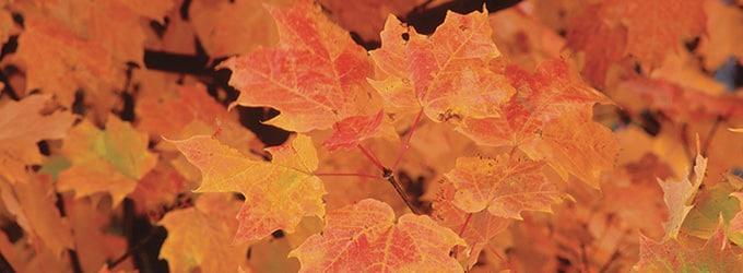 paysages quebec en automne