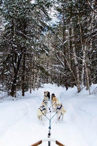 balade chien de traineau canada