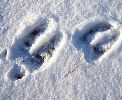 trace orignal neige