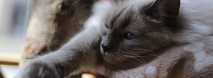 chat l'heureux