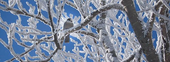 oiseaux du quebec en hiver