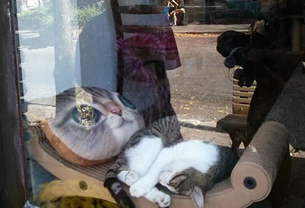 restaurant chat heureux montreal