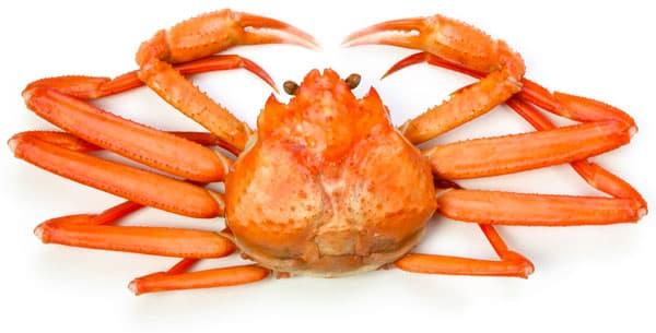crabe des neiges cuit