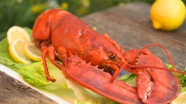 souper de homard