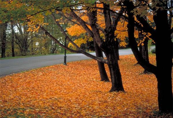 plaine abraham automne