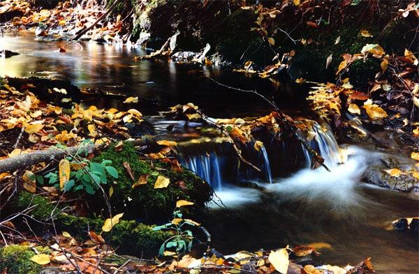 ruisseau a l'automne